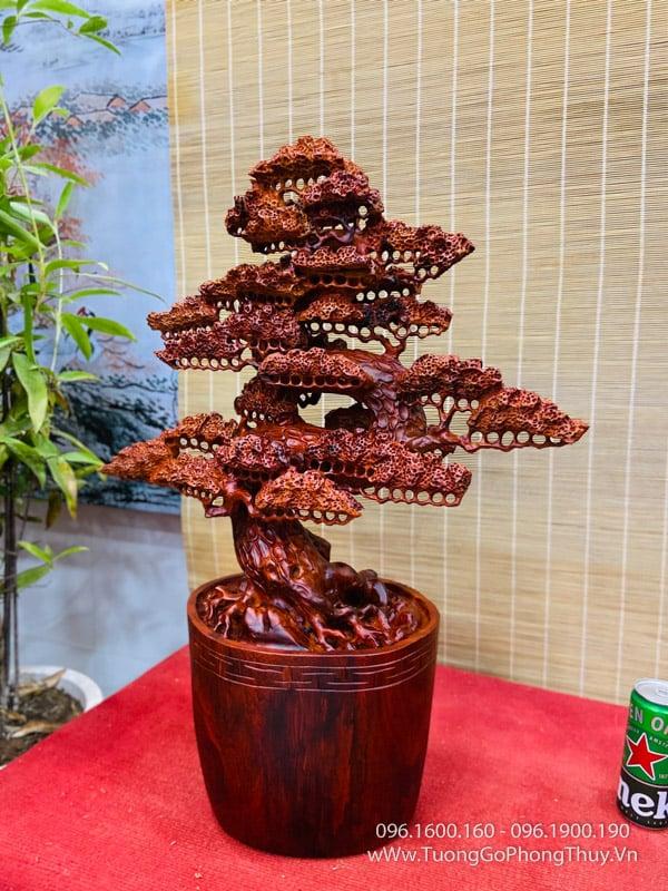 Bonsai cây tùng gỗ hương
